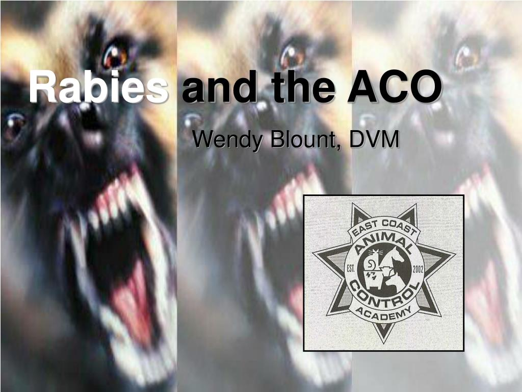 rabies and the aco l.