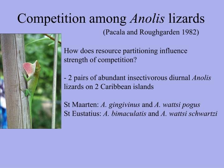Competition among anolis lizards