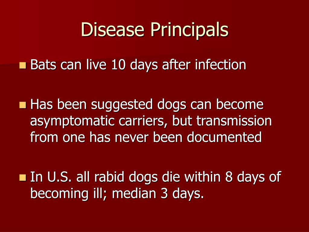 Disease Principals