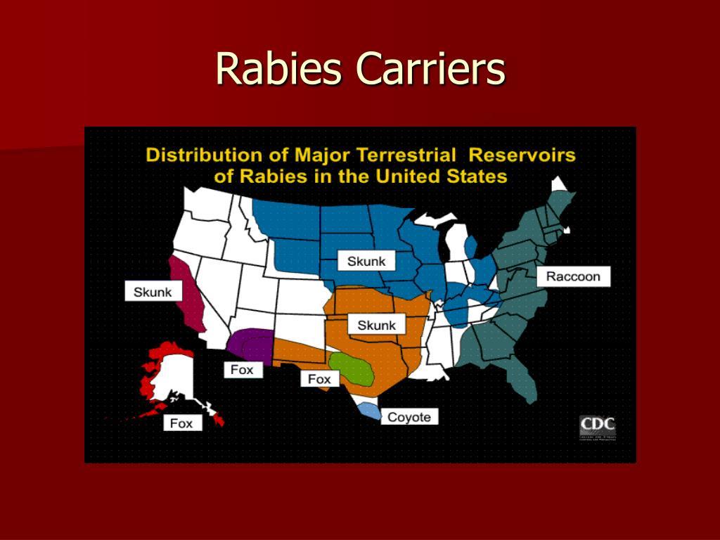 Rabies Carriers