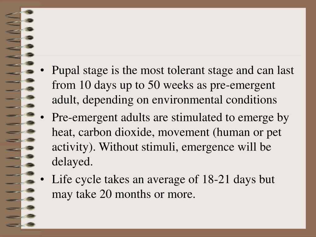 Pupal stage is the most tolerant stage and can last from 10 days up to 50 weeks as pre-emergent adult, depending on environmental conditions