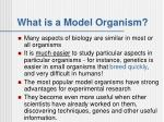 what is a model organism