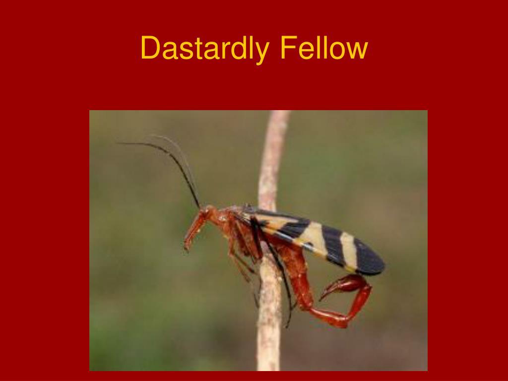 Dastardly Fellow
