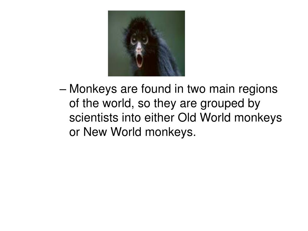 Monkeys are found in two main regions of the world, so they are grouped by scientists into either Old World monkeys or New World monkeys.