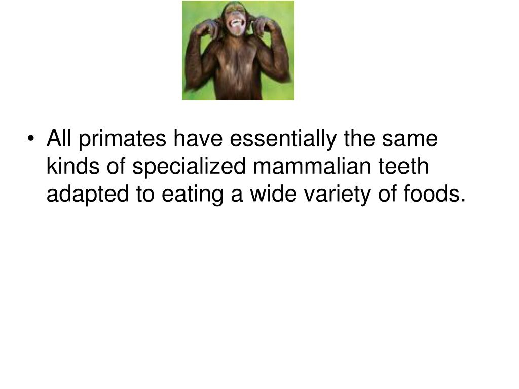 All primates have essentially the same kinds of specialized mammalian teeth adapted to eating a wide variety of foods.