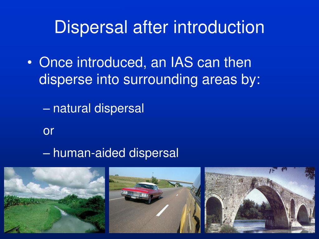 Dispersal after introduction