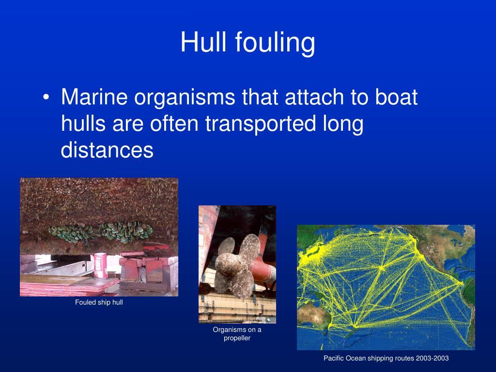 Fouled ship hull