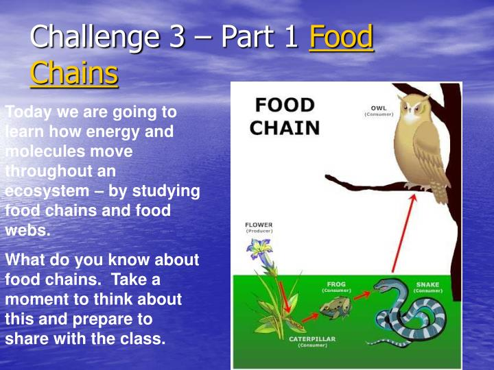 Challenge 3 part 1 food chains