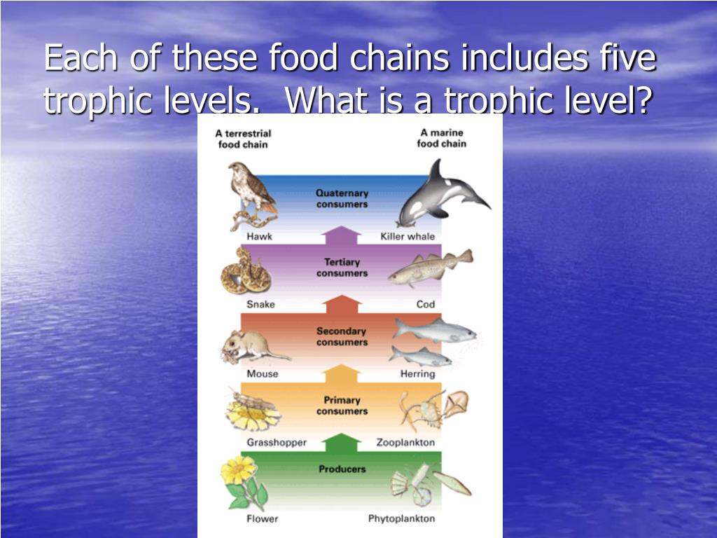 Each of these food chains includes five trophic levels.  What is a trophic level?