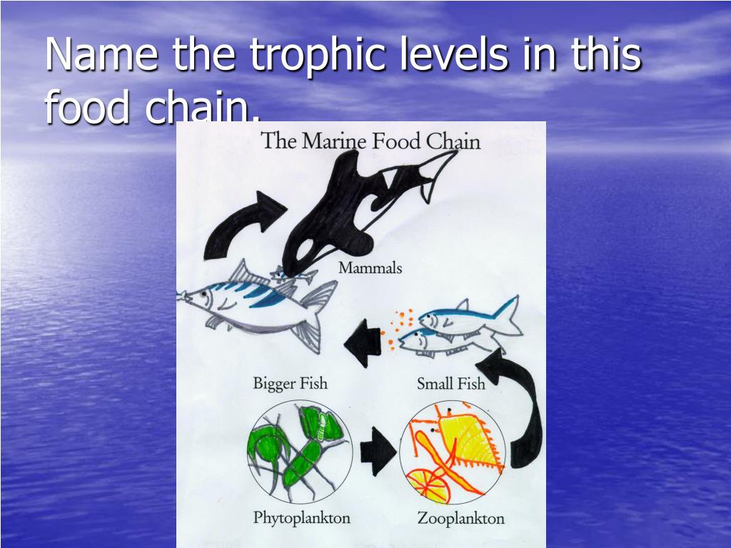Name the trophic levels in this food chain.
