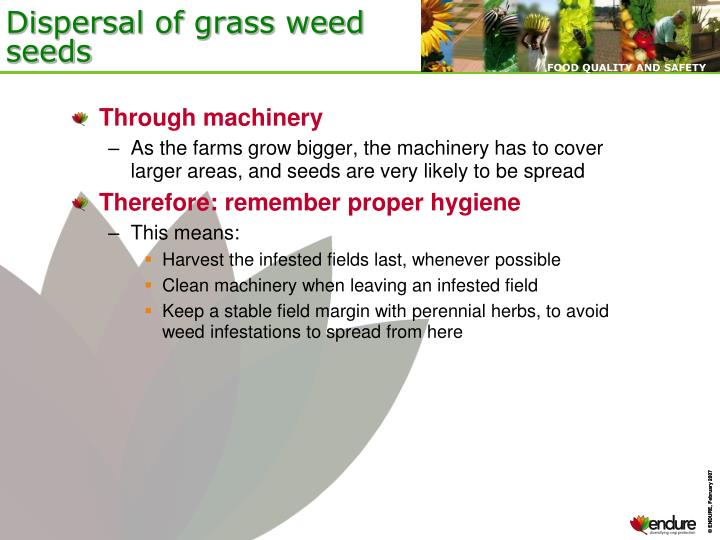 Dispersal of grass weed seeds