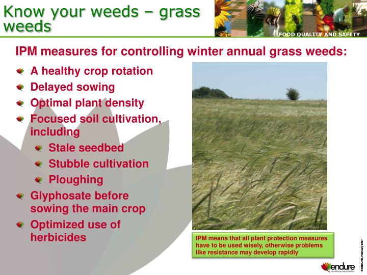 Know your weeds grass weeds