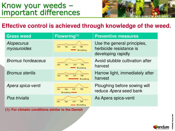 Know your weeds – important differences