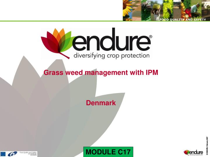 Grass weed management with IPM