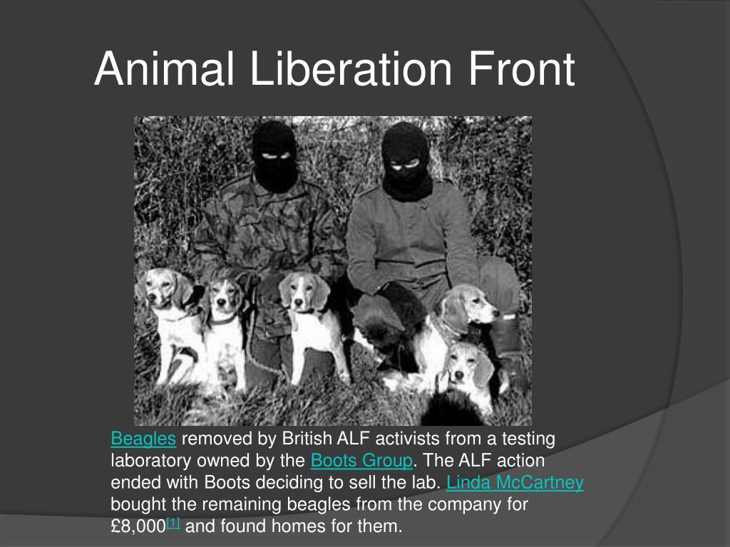 Ppt Animal Welfare Vs Animal Rights Powerpoint