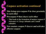 caspase activation continued