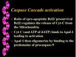 caspase cascade activation
