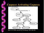 caspases activating caspases