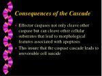 consequences of the cascade