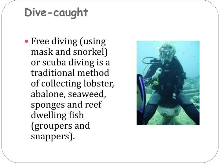 Dive-caught