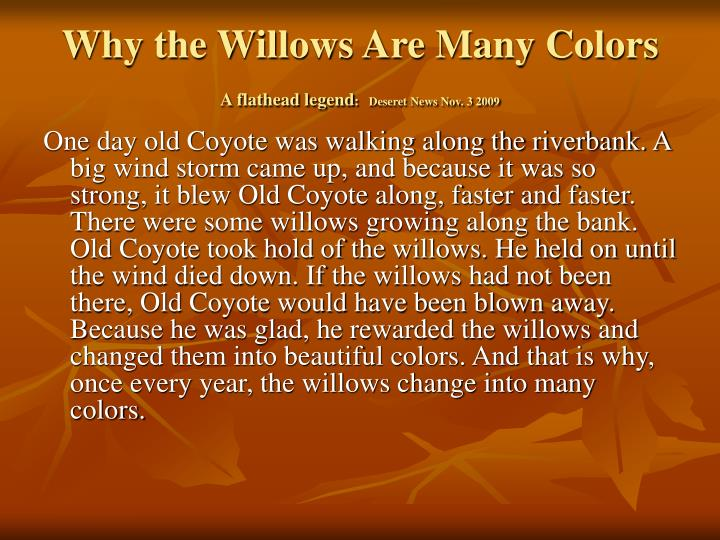 Why the Willows Are Many Colors