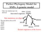 perfect phylogeny model for snps a genetic model