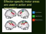 effector specific motor areas are used in action and perception