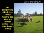 all competitors at high level sheep herding dog trials are border collies not other breeds of dog