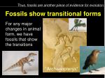 fossils show transitional forms