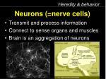 neurons nerve cells