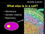 what else is in a cell