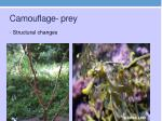 camouflage prey
