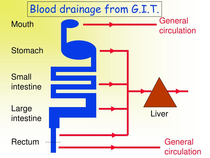 Blood drainage from G.I.T.